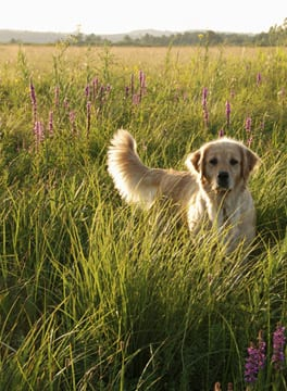 Dog running in the grass